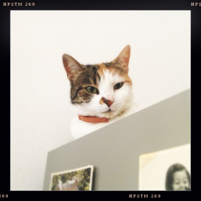 The cat found her place on the fridge