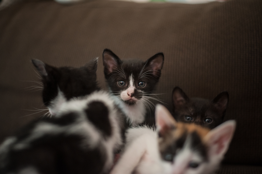 bunch of kittens